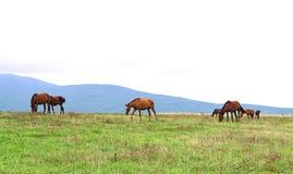 Kudde van paarden Royalty-vrije Stock Foto's