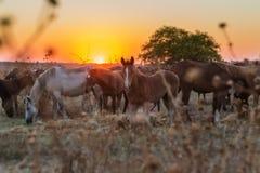 Kudde van paarden die na een looppas in het weiland rusten Stock Afbeeldingen
