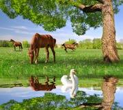 Kudde van paarden in een de lentelandschap stock afbeelding