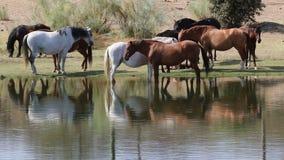 Kudde van paarden in Los Barruecos, Extremadura, Spanje stock videobeelden