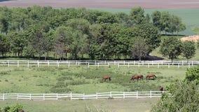 Kudde van paarden luchtmening stock video
