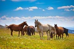 Paard die met veulen gras eten Royalty-vrije Stock Afbeeldingen
