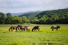 Kudde van paarden op de weide Stock Foto's