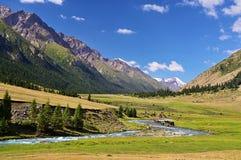 Kudde van paarden op een Alpiene weide, Tian Shan-bergen, Kyrgyzstan royalty-vrije stock afbeelding