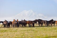 Kudde van paarden op een de zomerweiland Royalty-vrije Stock Afbeeldingen