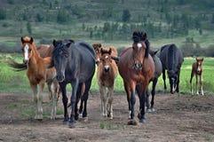 Kudde van paarden op een weiland Royalty-vrije Stock Foto