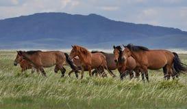 Kudde van paarden op een weiland Stock Foto's