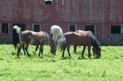 Kudde van paarden in weiland   royalty-vrije stock afbeeldingen