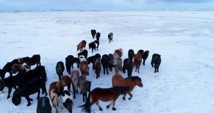 Kudde van poney in luchtmening stock videobeelden