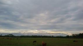 Kudde van vee dichtbij de voet van de berg royalty-vrije stock foto's