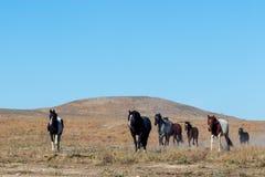 Kudde van wild paarden stock afbeeldingen