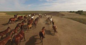 Kudde van wild paarden die over vlaktes lopen stock video