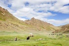 Kudde van yaks royalty-vrije stock afbeeldingen