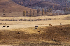 Kudden op de prairie Royalty-vrije Stock Foto's