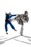 Kudo-Kämpfer kämpfen stockfotografie