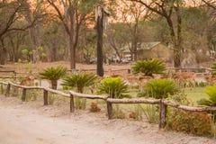 Kudu στη σαβάνα στη Ζιμπάμπουε, Νότια Αφρική στοκ εικόνα