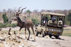 Kudu - Chobe N P Il Botswana, Africa Fotografie Stock