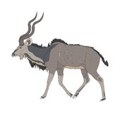 Kudu seen from side Stock Photos