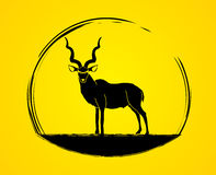 Kudu standing graphic vector. Stock Photos