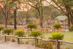 Kudu w wiosce w Zimbabwe Południowa Afryka obrazy stock