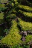 Kudus Indonésia da vila de Duplak imagens de stock