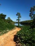 Kudzu ao longo do rio Fotografia de Stock Royalty Free