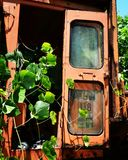 Kudzu coberto de vegetação Fotos de Stock Royalty Free