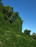 Kudzu everywhere Stock Image