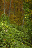 Kudzu, Herbst, Cherokee N-Düngung stockfotografie