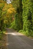 Kudzu, outono, N-F Cherokee imagem de stock royalty free