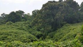 Kudzu Take over. Taken in High Falls Georgia, USA Kudzu overgrown ravine Royalty Free Stock Images