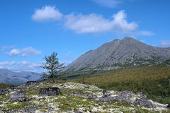 Kuelporr Mount and small birch, Khibiny Mountains Stock Photo