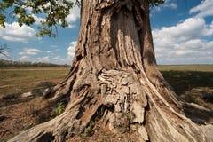 kufer drzewny Obrazy Stock
