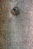 kufer szczekać drzewny obrazy royalty free