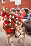 Kufstein/Austria/Tirol-19 Septiembre: El Dr. adornado del ganado de la vaca Imagenes de archivo