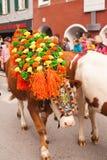 Kufstein/Austria/Tirol-19 Septiembre: El Dr. adornado del ganado de la vaca Imagen de archivo