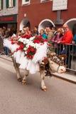 Kufstein/Austria/Tirol-19 Septiembre: El Dr. adornado del ganado de la vaca Foto de archivo libre de regalías
