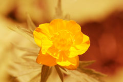 Kugel-Blume Stockfotografie