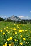 Kugel-Blumen u. Rinnkogel Stockfotografie