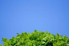 Kugel der grünen Erde über dem Himmel Lizenzfreies Stockfoto
