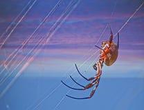 Kugel-Spinnen-spinnendes Netz Lizenzfreie Stockfotos