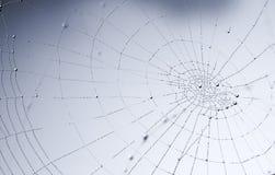 Kugelförmige glänzende Tautropfen auf dem Spinnenweb Stockfotografie