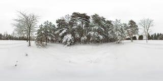 kugelförmiges Panorama 3D des Winterwaldes mit Schnee und der Kiefern mit 360-Grad-Betrachtungswinkel Bereiten Sie für virtuelle  lizenzfreie abbildung
