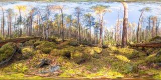 Kugelförmiges Panorama 360 Grad 180 alte moosbedeckte Flusssteine in einem Koniferenwald Stockbilder