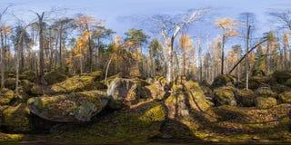 Kugelförmiges Panorama 360 Grad 180 alte moosbedeckte Flusssteine in einem Koniferenwald Stockbild
