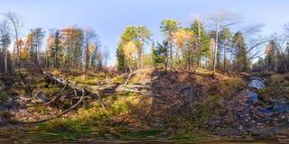 Kugelförmiges Panorama 360 Grad 180 Flussstrom im Wald und in einem gefallenen Baum vr Inhalt Stockbild
