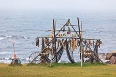 Kugge för fiskuttorkning i Island arkivbilder