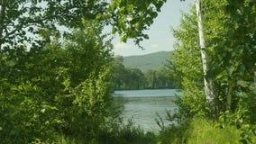 1 4 kugghjul Uppsättning av längd i fot räknat med härliga sikter till och med de stora gröna träden på en stad för sjö förutom lager videofilmer