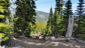 Kuguara widok górski Fotografia Royalty Free