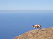 Kuh über einer Klippe Lizenzfreie Stockfotos